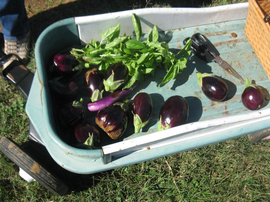 Eggplant and basil