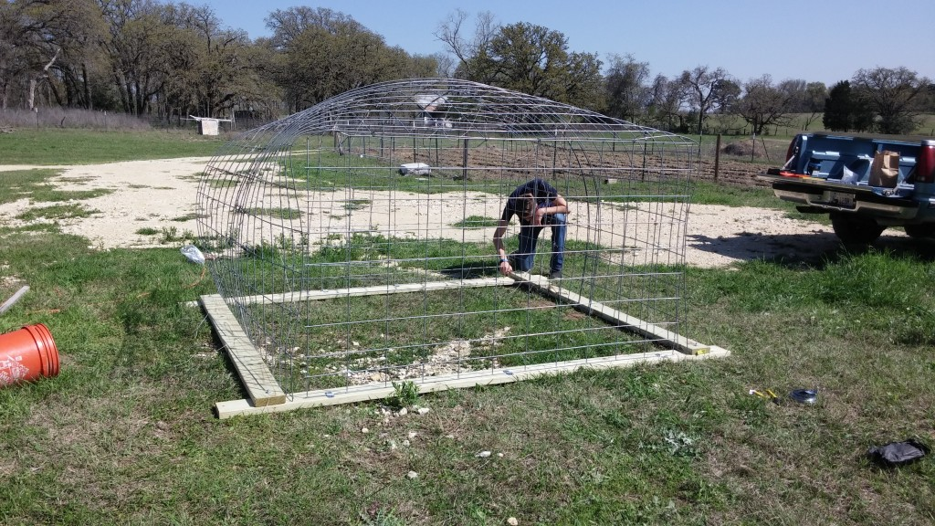 Main frame complete for first new chicken coop