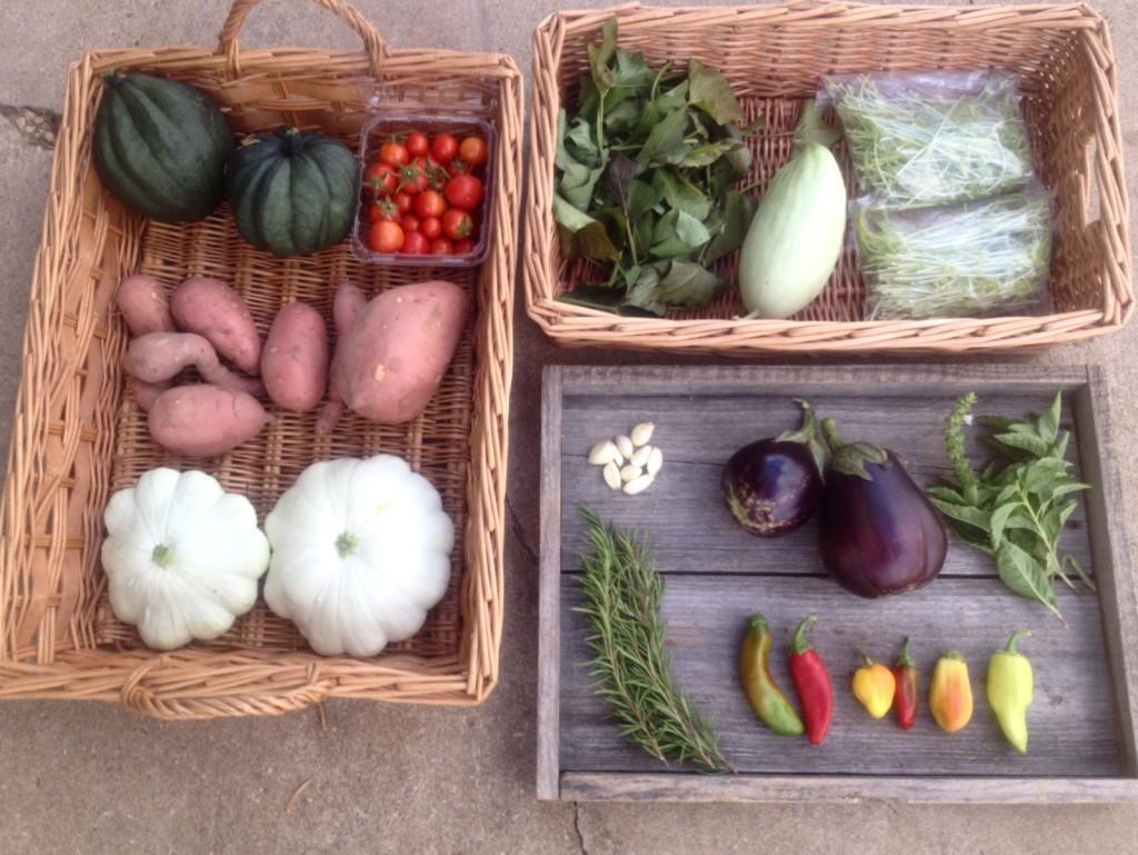 Blessing Falls - Week 3 Fall Farm Share