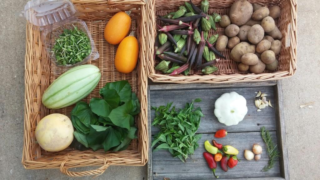 Blessing Falls Farm - Fall CSA Full Size Farm Share, Week 1