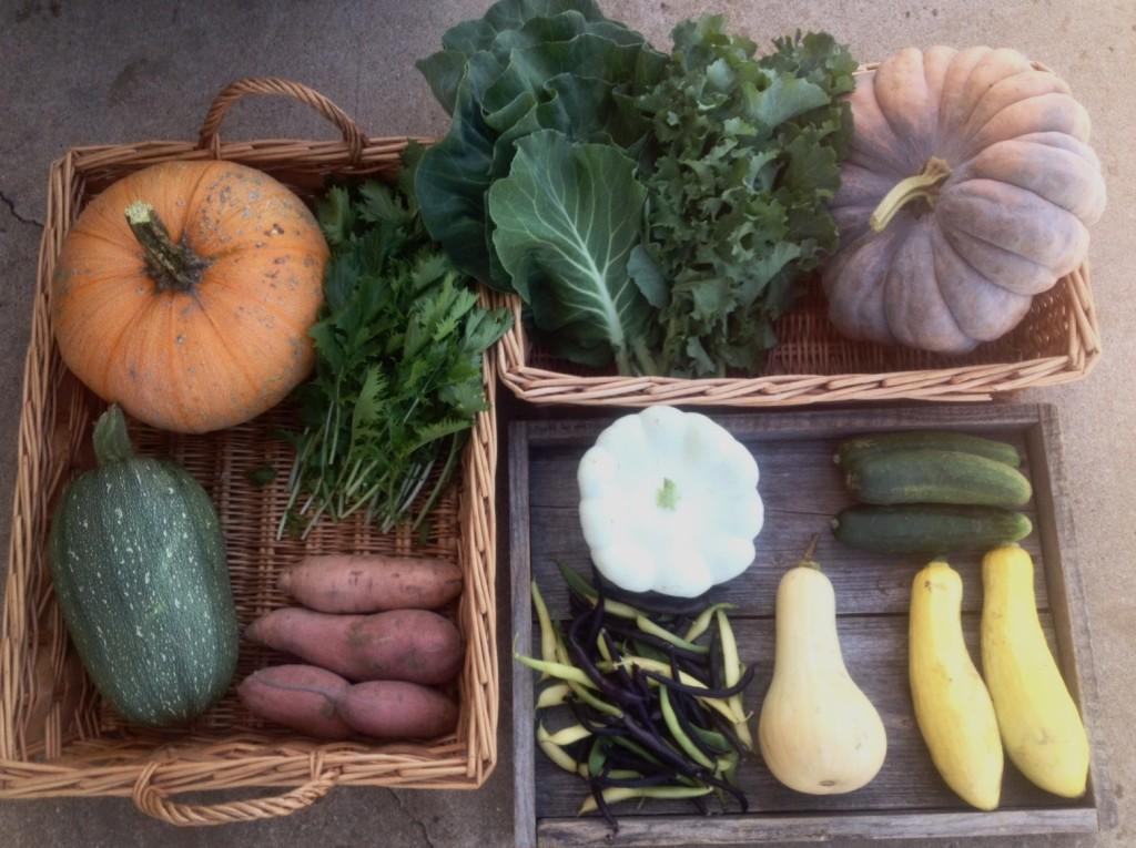 Fall Season CSA - Week 9 Full Farm Share
