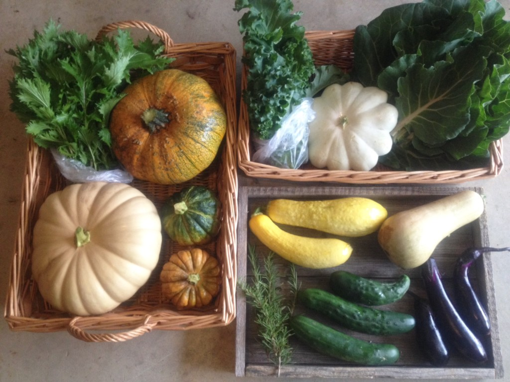 Fall CSA Week 10 - Full Share, Blessing Falls Farm