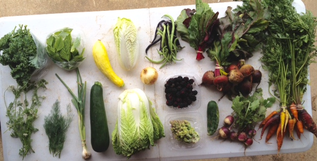Blessing Falls Spring CSA/Farm-Share Week 9 Full Share: (clockwise from top left) Kale, amaranth leaves, squash, Chinese cabbage, onion, beans, chard, beets, carrots, turnips, cucumber, blackberries, cauliflower, cabbage, zucchini, green garlic, dill, cilantro flowers.