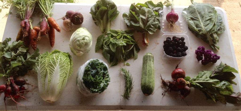 Blessing Falls Spring CSA - Week 7 Full Share.  (clockwise from top left) Carrots, turnips, cabbage, Bok choy, amaranth leaves, chard, onion, blackberries, Portuguese kale, cauliflower, beets, squash, Rosemary, kale, Chinese cabbage, radishes