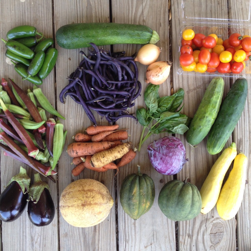 Blessing Falls Farm Share Summer Week 2. Top: Peppers, zucchini, beans, onions, tomatoes Middle: okra, carrots, basil, cabbage, cucumbers  Bottom: eggplant, cantaloupe, acorn squash, summer squash