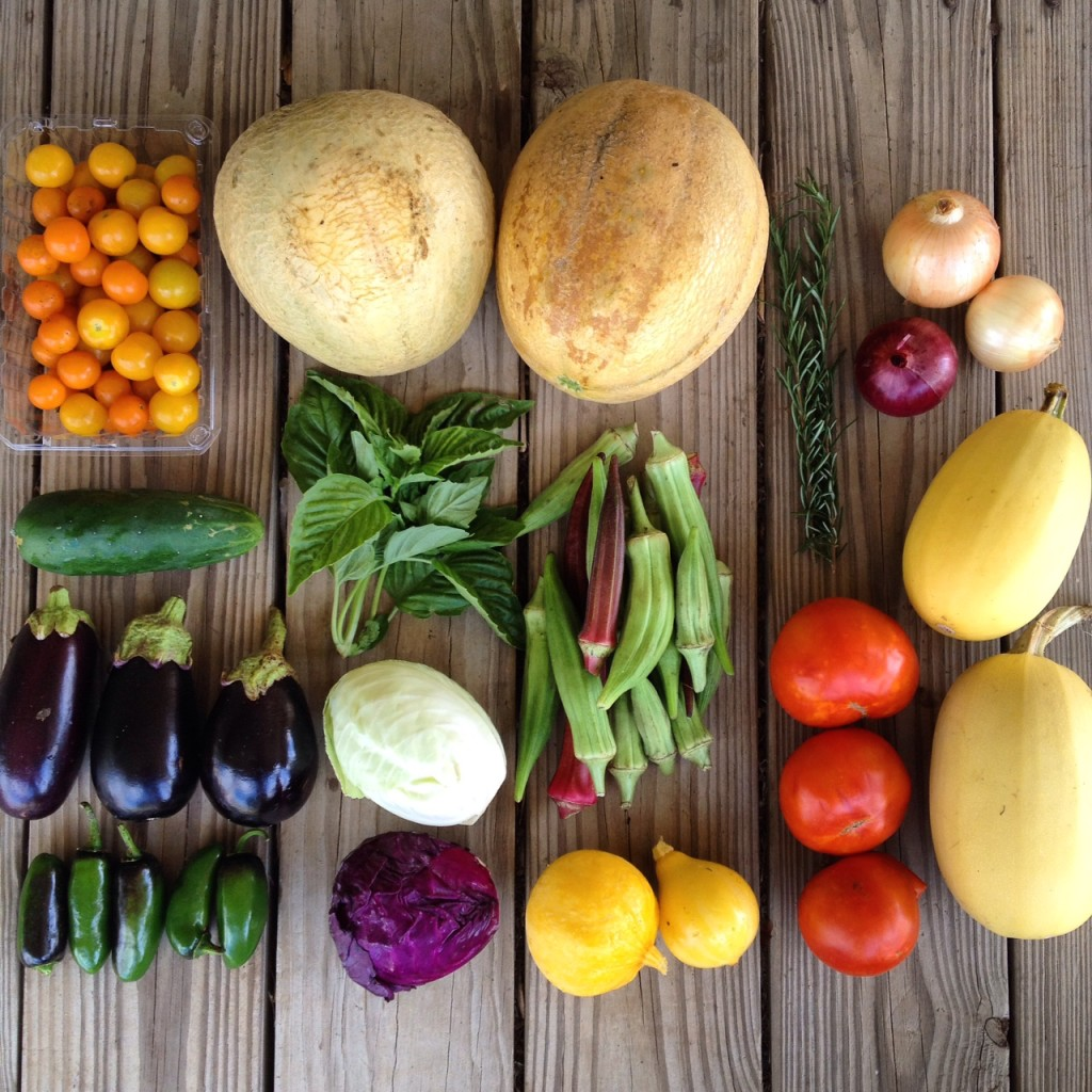 Blessing Falls Farm Share, Summer 2016 week 3 (clockwise from top left): Cherry tomatoes, cantaloupe, Rosemary, onions, cucumber, basil, okra, eggplant, green cabbage, jalapeños, red cabbage, summer  squash (lemon), slicing tomatoes, winter squash (spaghetti)
