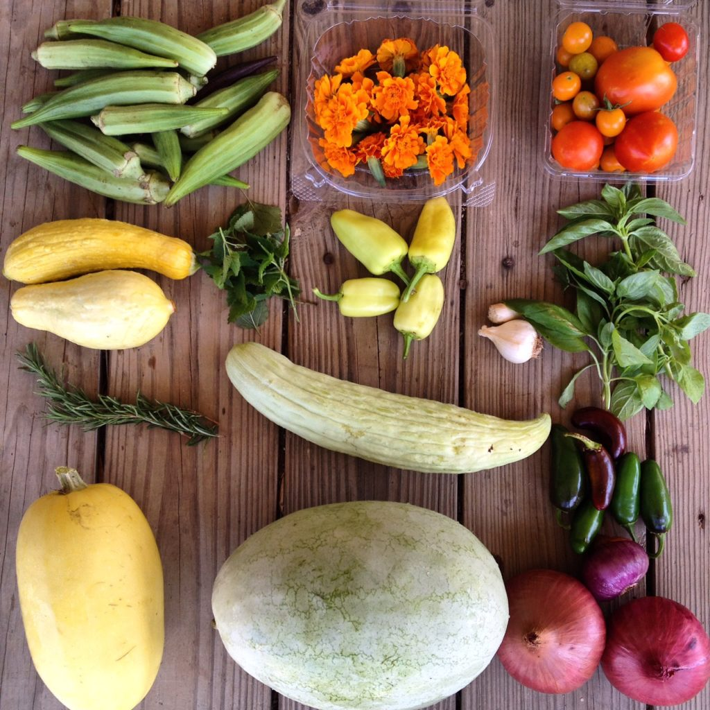 Blessing Falls Summer Week 6 Farm Share: Okra, marigolds, tomatoes, squash, lemon balm, peppers, garlic, basil, Rosemary, Armenian cucumber, peppers (or eggplant), winter squash, watermelon, onions