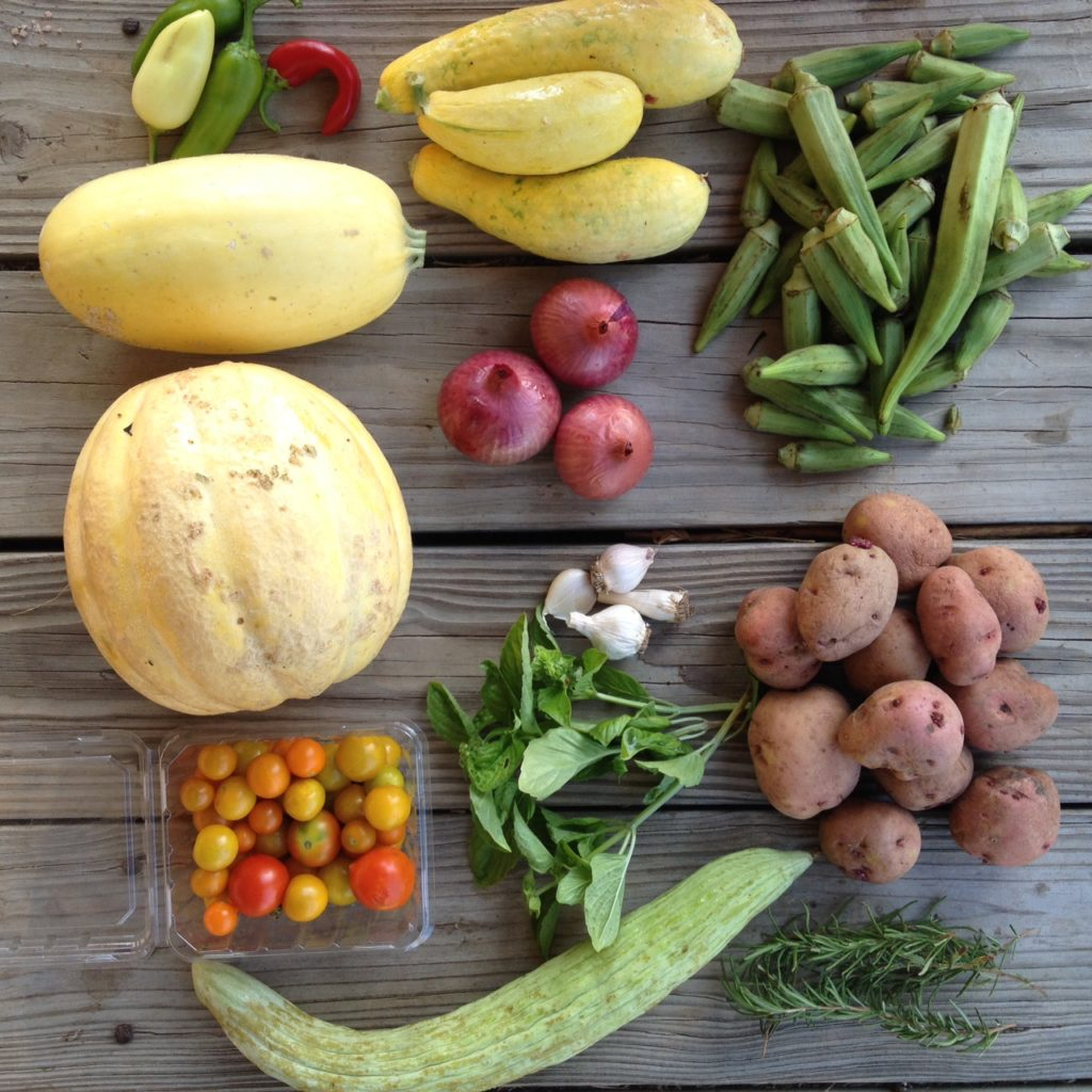 Blessing Falls Summer Week 7 Full Share: Armenian cucumber, tomatoes, melon, winter squash, peppers, basil, garlic, onions, squash, Rosemary, potatoes, okra