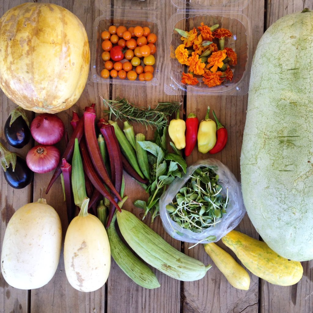 Blessing Falls Summer Week 9 Full Share: Small melon, tomatoes, marigolds, large watermelon, eggplant, onions, okra, Rosemary, basil, peppers, sunflower sprouts, winter squash, cucumbers, squash
