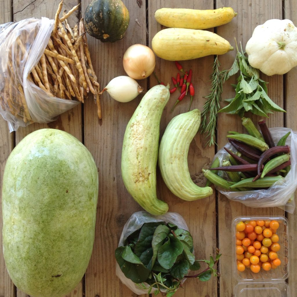 Blessing Falls Fall Week 1 Full Share (clockwise from top left) watermelon, black eyed peas, winter squash (acorn pictured), onions, squash, peppers (Thai chilies pictured), Rosemary, basil, Armenian cucumbers, okra, tomatoes (or eggplant), Malabar spinach