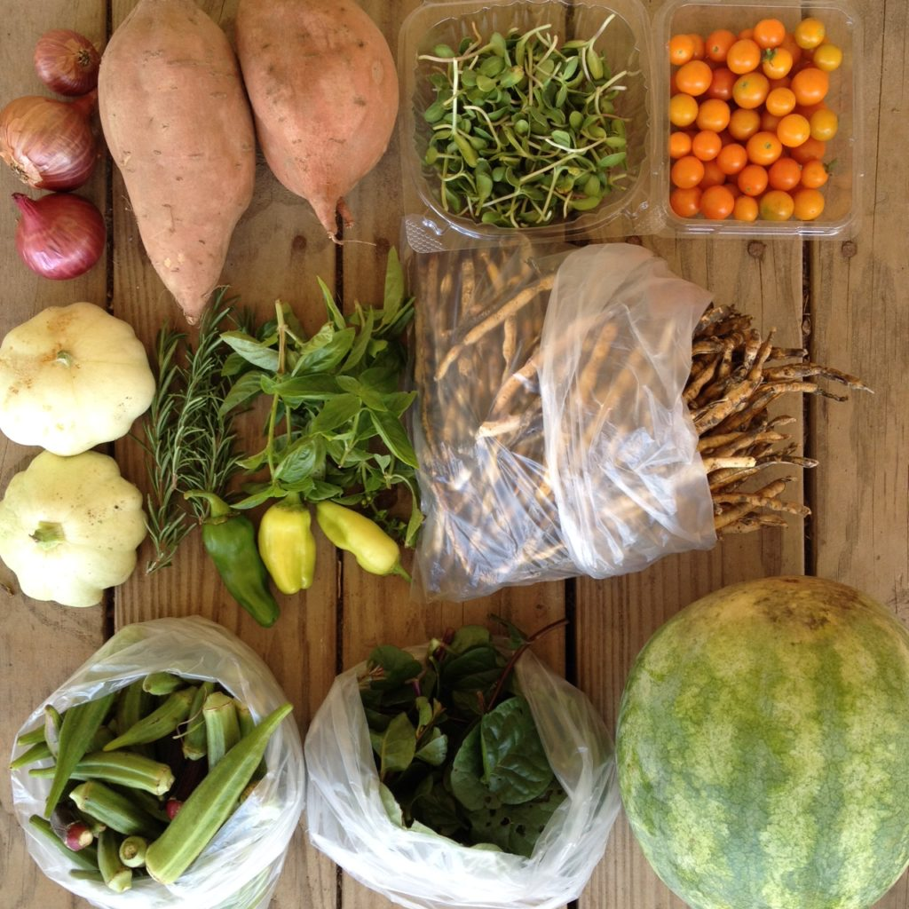 Blessing Falls Farm Share, Fall 2016 Week 4: Onions, sweet potatoes, sunflower sprouts, tomatoes, squash, Rosemary, peppers, basil, black eyed peas, okra, Malabar spinach, melon (or pumpkin)