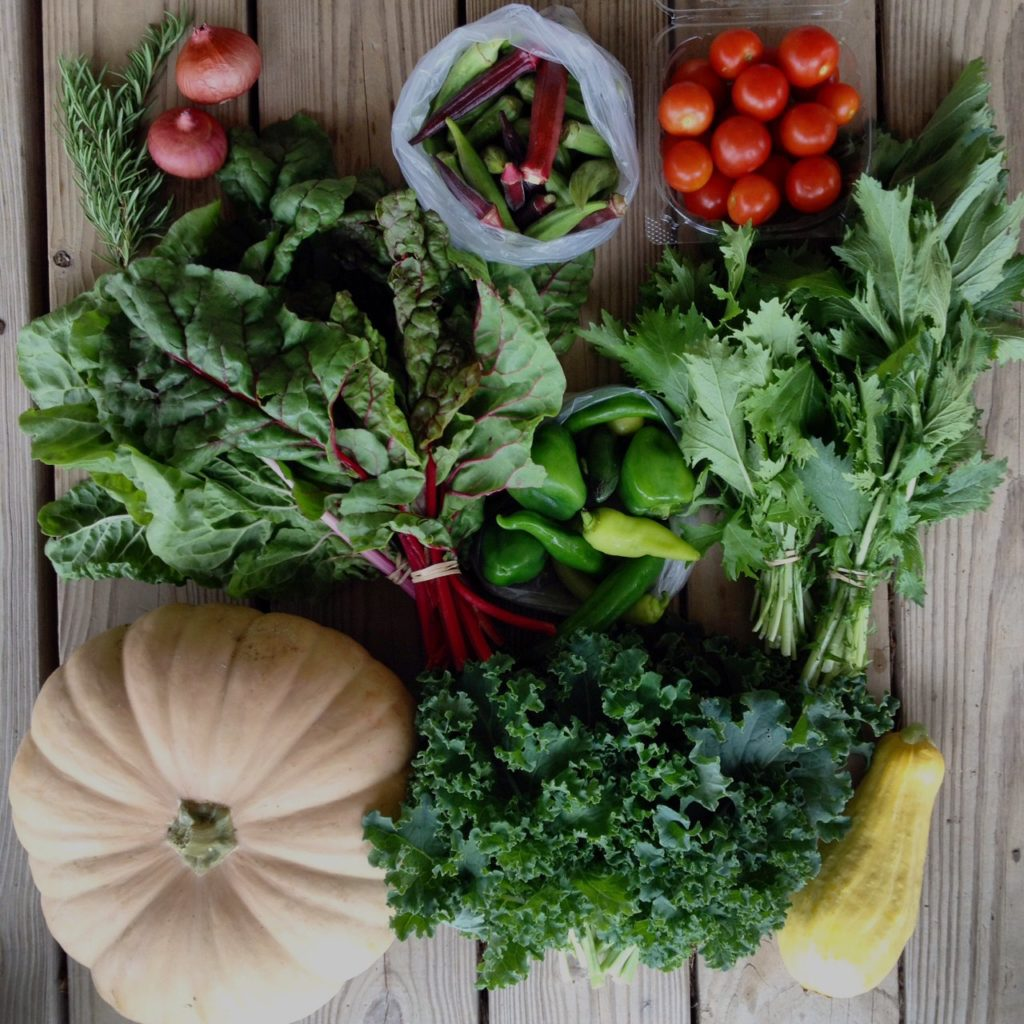 Blessing Falls Week 6 Fall Season Share: Rosemary, onions, okra, tomatoes, chard, peppers, mizuna, pumpkin, kale, squash
