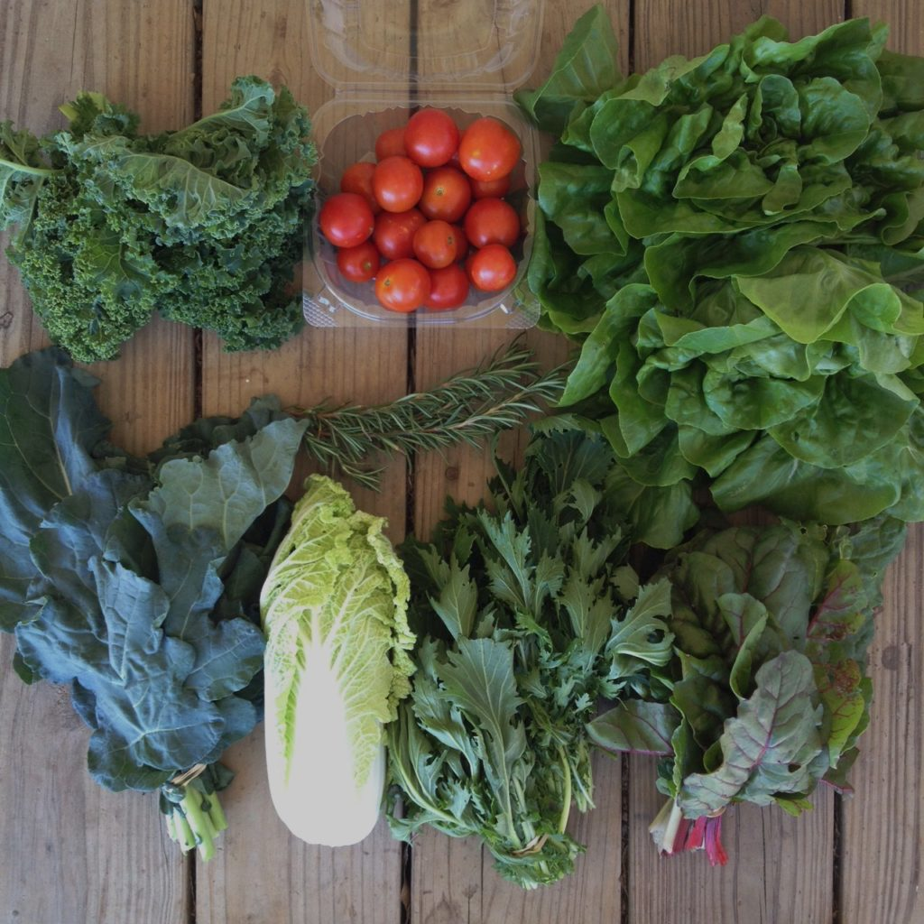 Blessing Falls - Week 9 Fall Season Farm Share: Kale, tomatoes, lettuce, broccoli greens, cabbage, rosemary, mizuna, chard