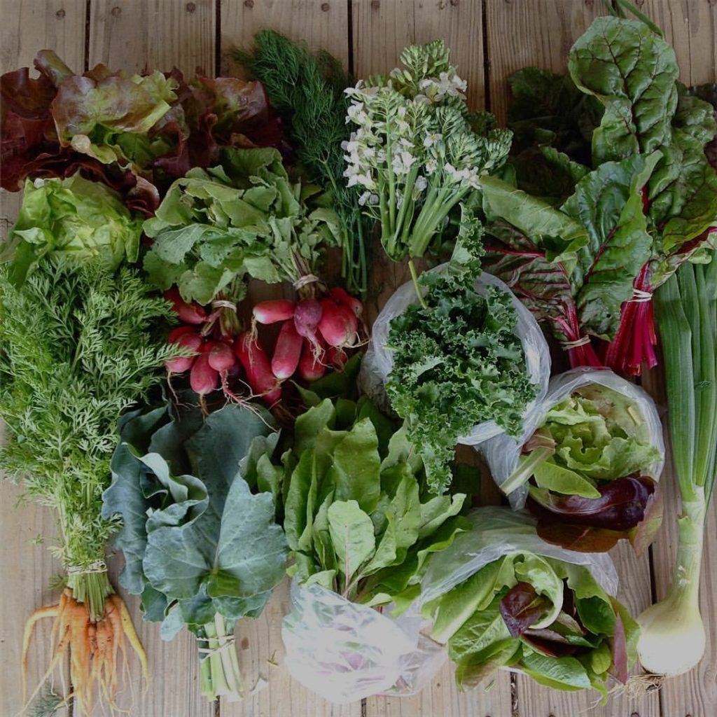 Blessing Falls Spring Week 3 Full size Share: Head lettuce, dill, broccoli flowers, chard, radishes, kale, carrots, broccoli greens, beet greens, lettuce mix, onion