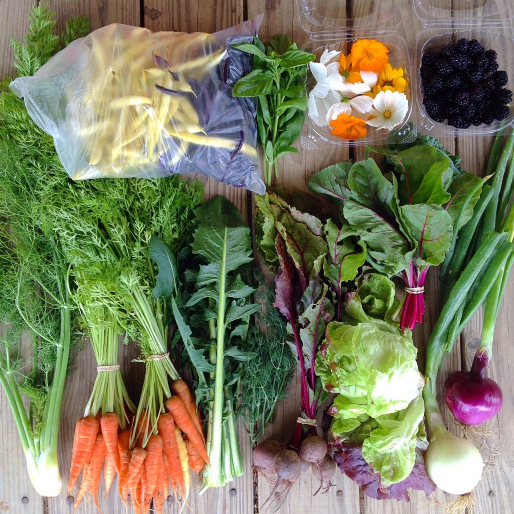 Blessing Falls Week 7 Spring/Summer Full Share: Yellow and purple beans, basil, edible flowers (cosmos), blackberries, chard, red onion, yellow onion, lettuce, beets, dill, dandelion greens (or squash), carrots, fennel