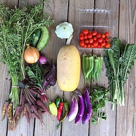 Blessing Falls Farm Spring/Summer, Week 13 Farm Share