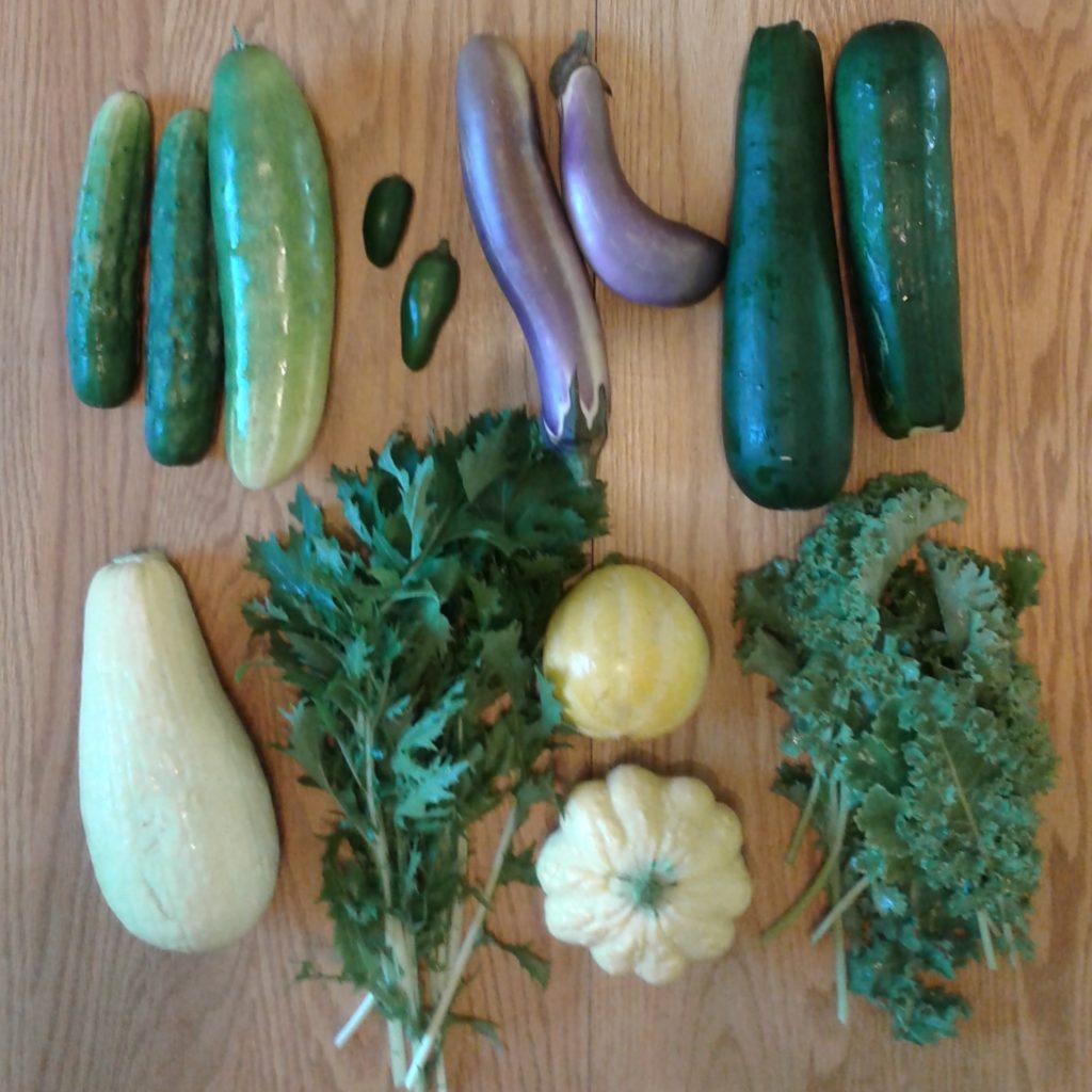 "2017 Fall season Week 1 ""Mini"" Share.  Clockwise from top left: Cucumbers, Jalapeno Peppers, Asian Eggplant, Zucchini, Kale, Lemon Squash, Mizuna, Yellow Squash."