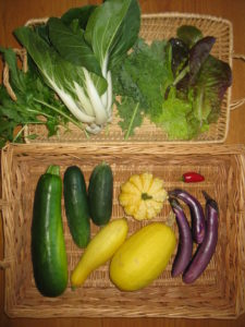"Blessing Falls 2017 Fall season Week 4 ""Mini"" Share. Clockwise from top left: Mizuna, Bok Choy, Kale, Lettuce, Jalapeno, Asian Eggplant, Lemon Squash, Spaghetti Squash, Cucumbers, Yellow Squash, Zucchini"