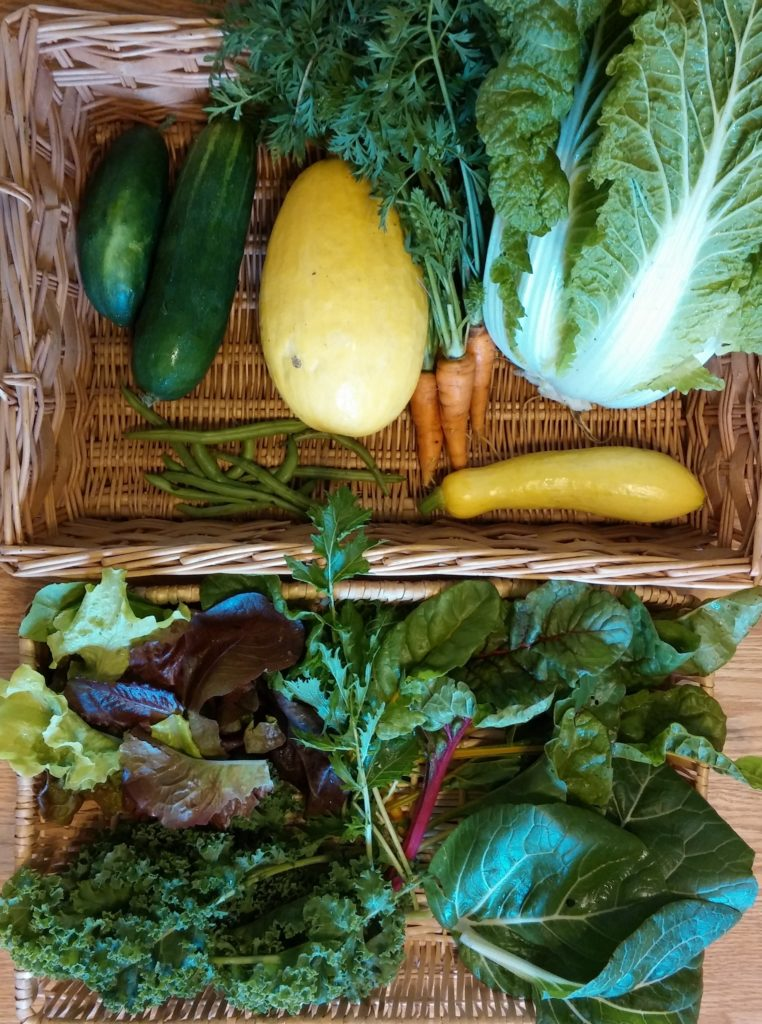 "Blessing Falls 2017 Fall season Week 5 ""Mini"" Share. Clockwise from top left: Cucumbers, Spaghetti Squash, Carrots, Chinese (Napa) Cabbage, Yellow Squash, Swiss Chard, Bok Choy, Mizuna, Kale, Lettuce, Green Beans"